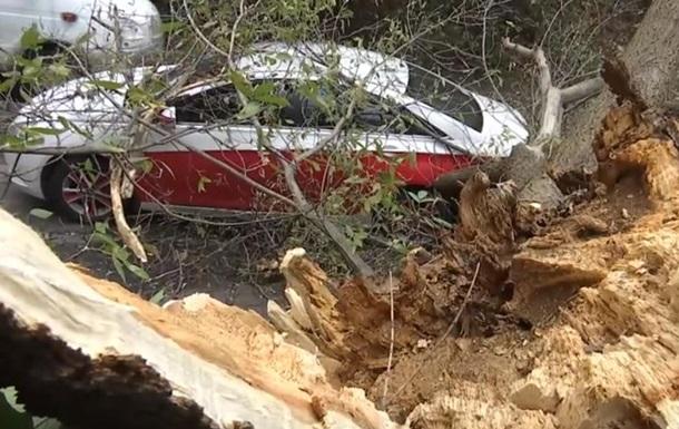 На Татарке гнилое дерево упало на машину с водителем