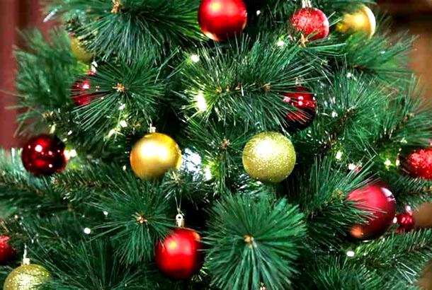 3 декабря в Киев привезут новогоднюю ель