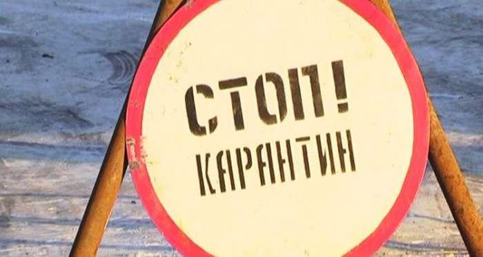 В киевском микрорайоне из-за бешенства ввели карантин на 2 месяца