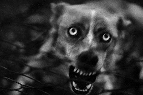 Киевлян предупреждают о появлении бешеных диких животных