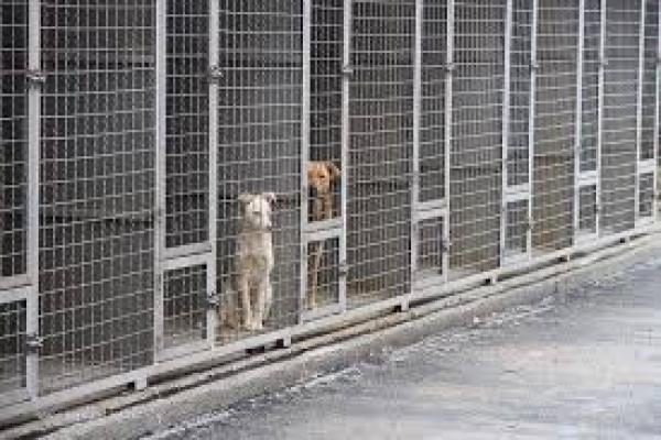 В Киеве начнут строить Центр защиты животных