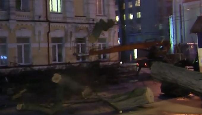 В Киеве внезапно рухнула 30-метровая акация