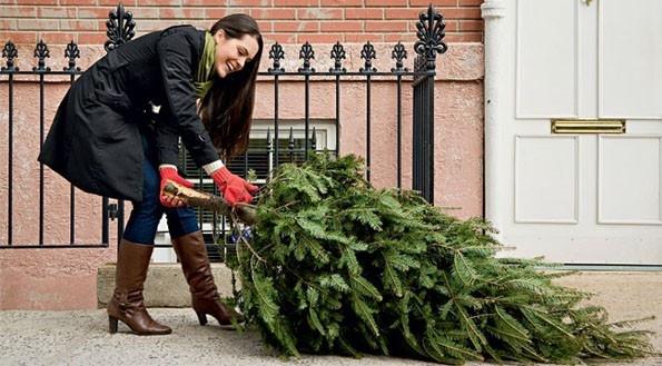 В Киеве из-за елки подрались мужчины