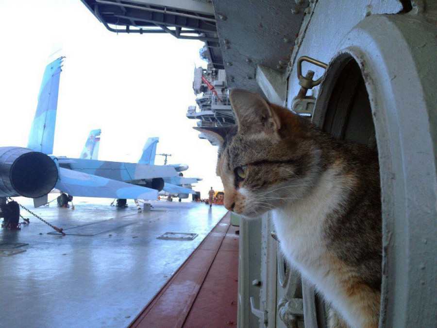 """В аэропорту """"Киев"""" задержали рейс из-за животного"""