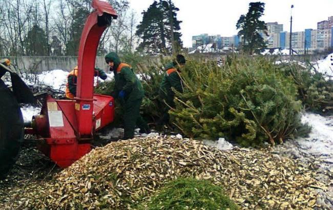 Куда выбросить елку в Киеве?