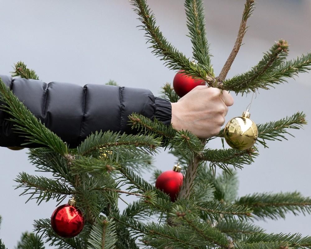 Пункты приема использованных елок в Киеве откроются с 12 января