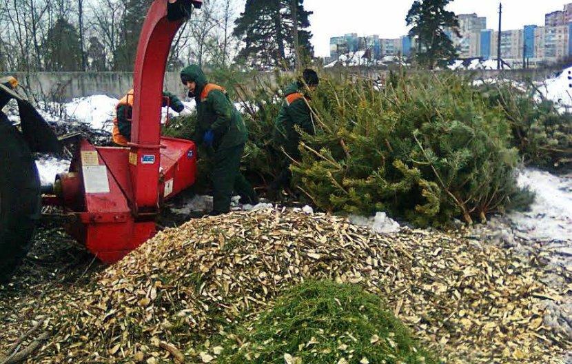 Стало известно, куда можно выбросить елки в Киеве