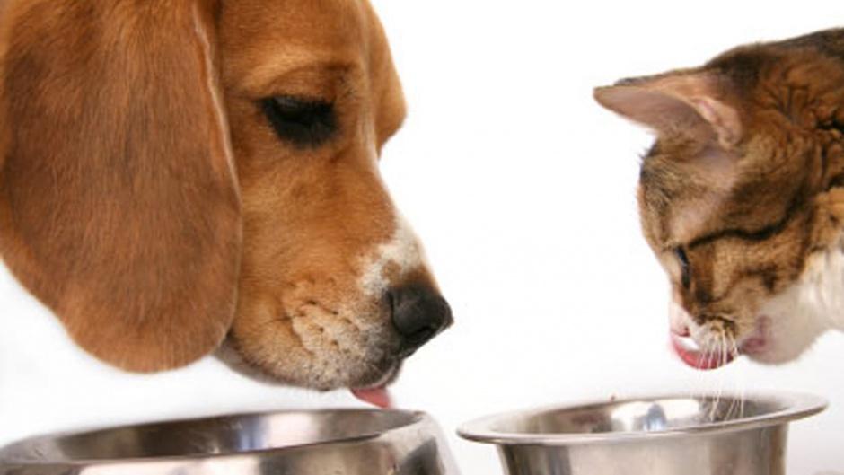Отличный корм для кошек и собак 8 in 1