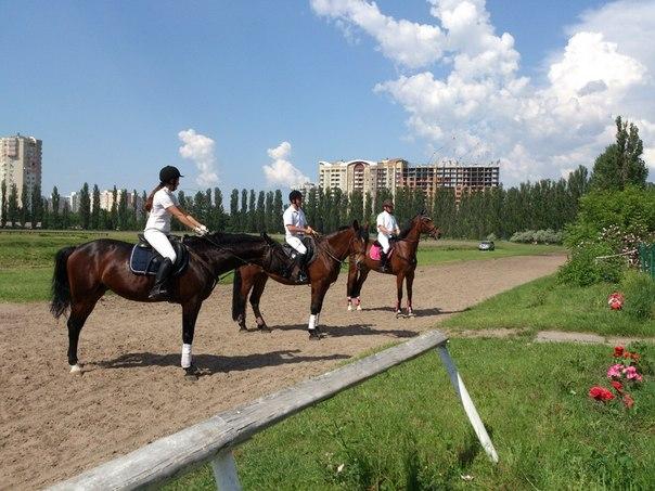 В КГГА хотят, чтобы лошадки в Киеве снова приносили деньги