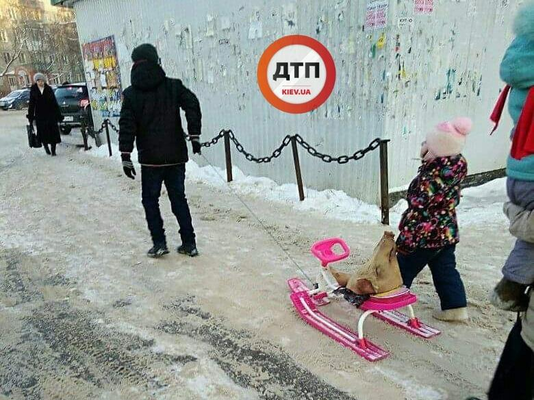 В Киеве мужчина решил покатать на санках голову свиньи вместо ребенка