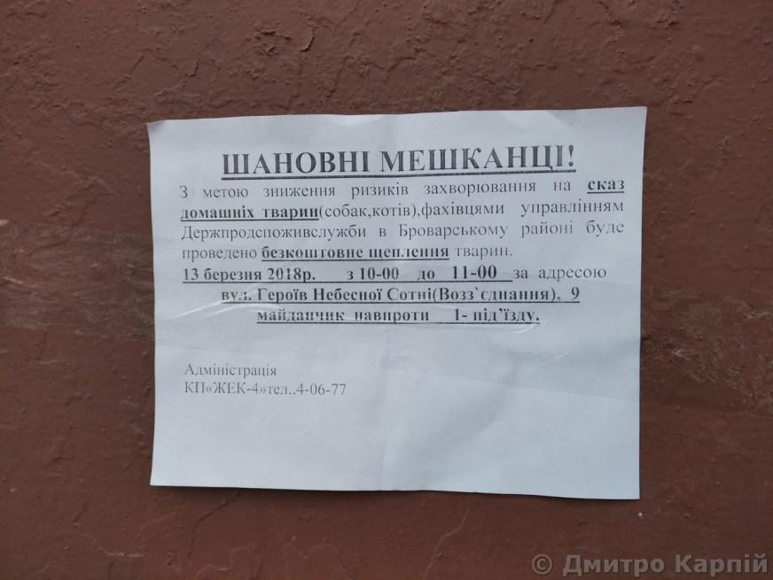 На Киевщине смертельно больной кот искусал дочь своего хозяина