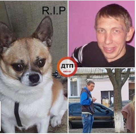 """В Киеве """"придурок"""" убил собаку, выбросив ее с 9 этажа жилого дома"""