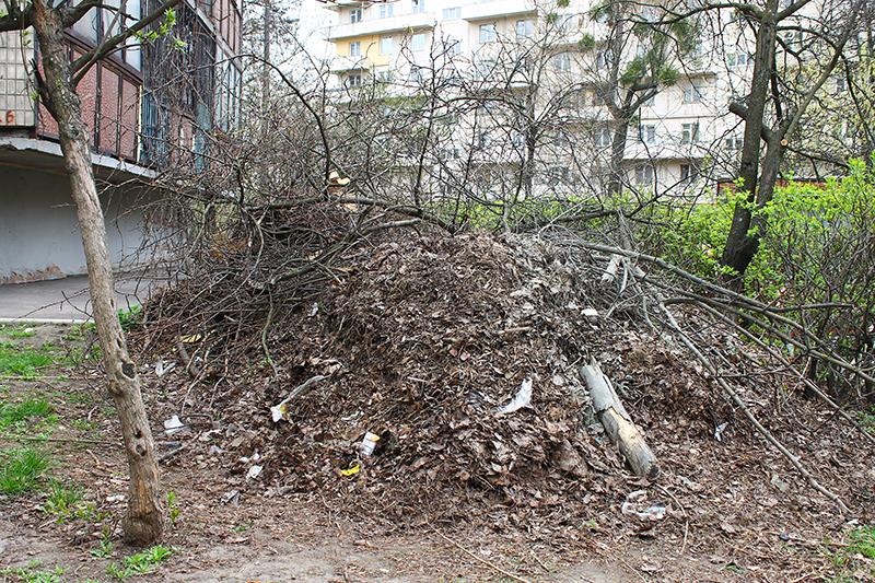 """В киевском жилом дворе коммунальщики """"законсервировали"""" осенние листья"""