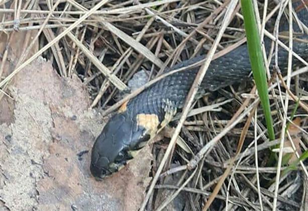 Во время пикника на Троещине к отдыхающим приползли ядовитые змеи