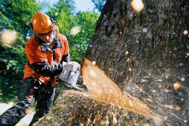 В Жулянах мужчина уничтожил деревья, которые мешали ему заезжать во двор