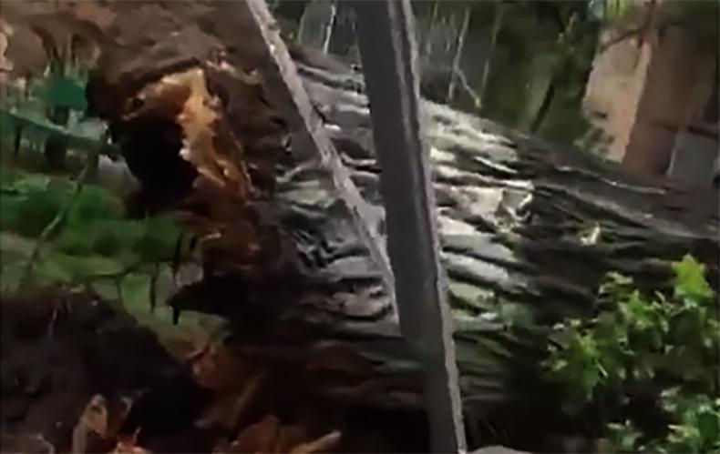 На улице Киева ветер снес большое дерево