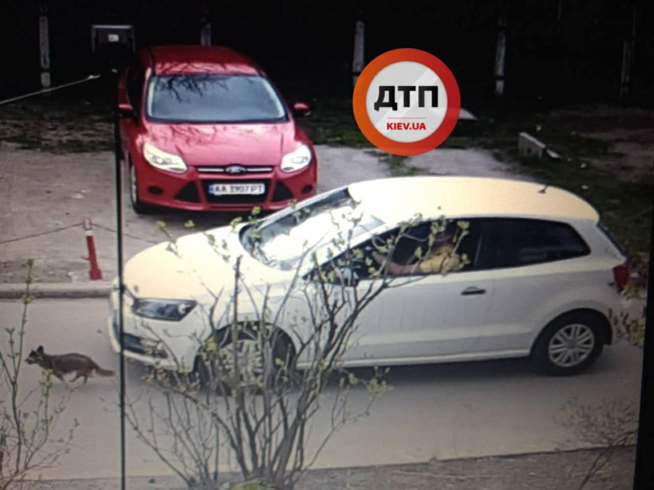 В Киеве водитель авто намеренно раздавил маленькую собачку