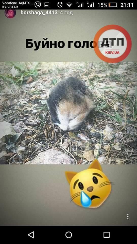 В Святошинском районе засекли утырка-живодера, убивающего котов