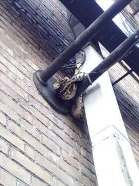 В Киеве на фонарном столбе нашли питона