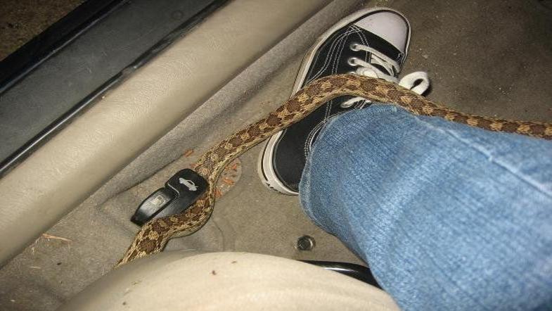 Киевлянину в машину пробралась рептилия
