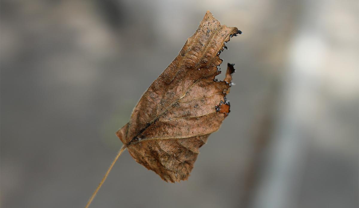Киевлянам напомнили об ответственности за сжигание листвы