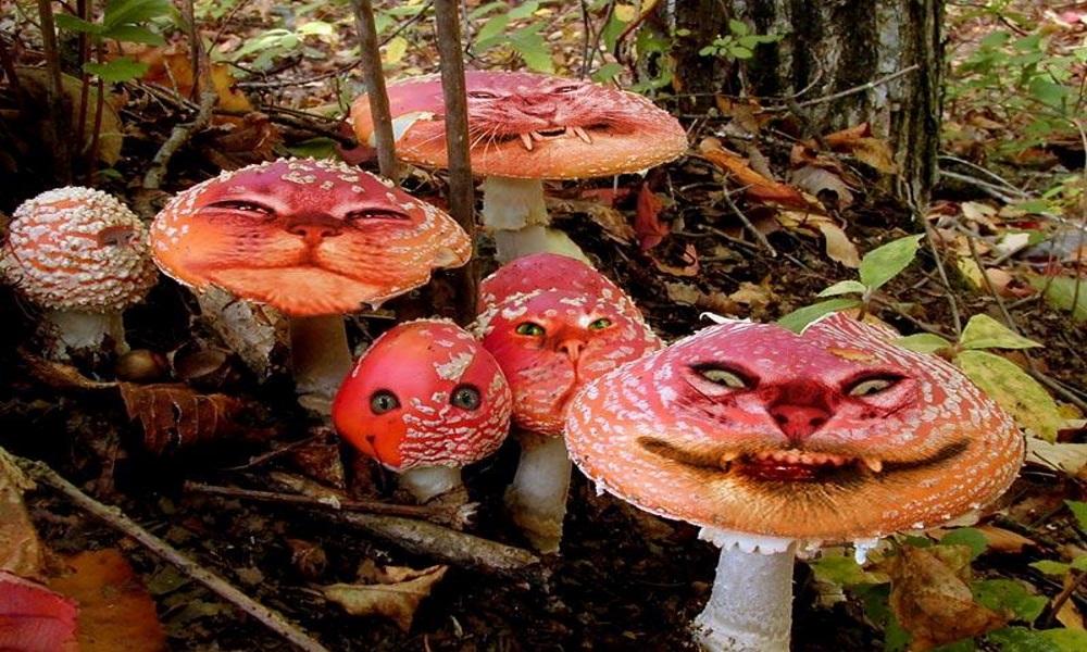 Киевляне перепутали опасные грибы со съедобными и отравились