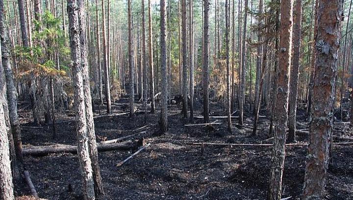 В Киевзеленстрое рассказали, почему в столице гибнут деревья