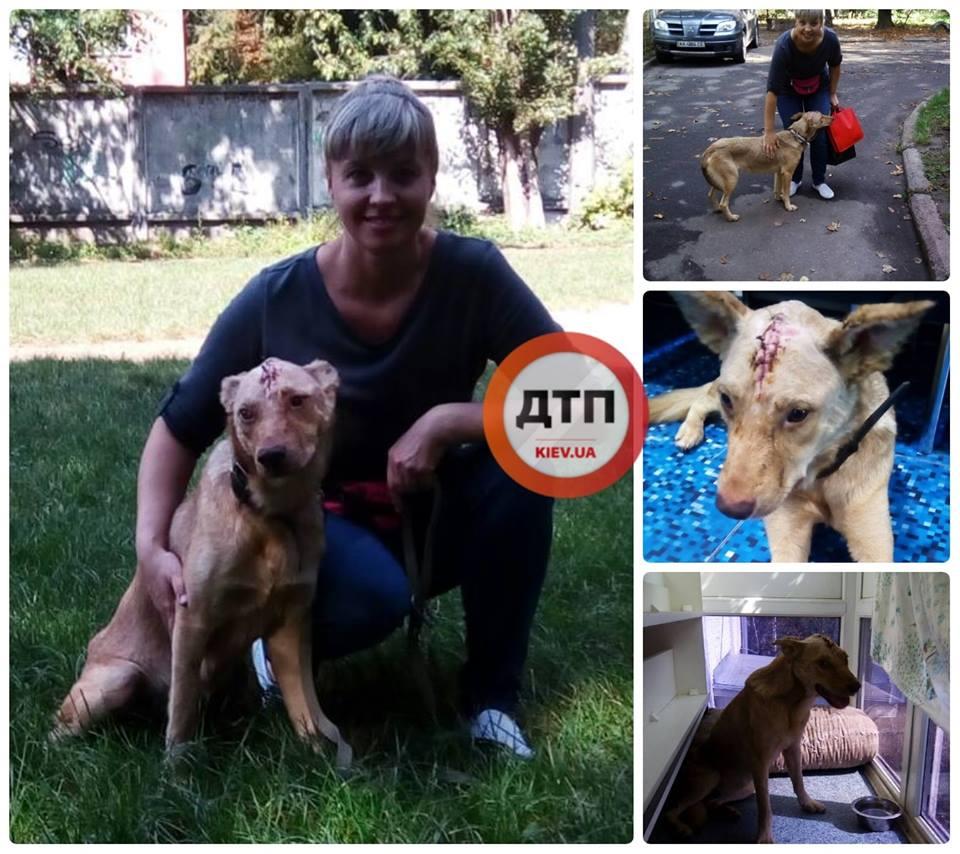 Киевский живодер пробил собаке голову шуруповертом