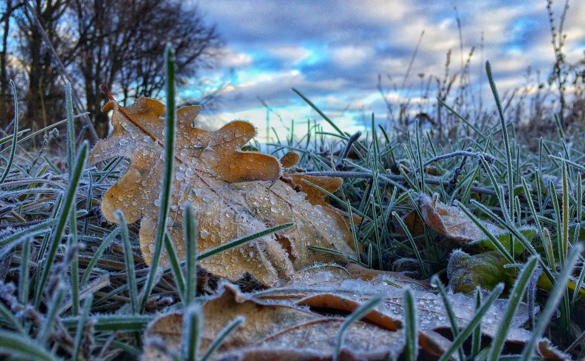 В Киев грядут заморозки, а затем потепление на несколько дней
