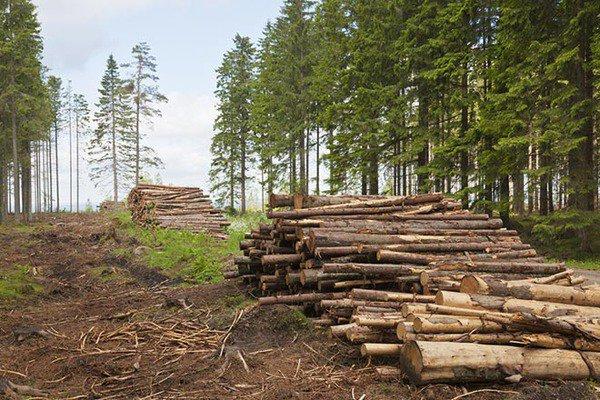 В Киевской области дровосеки вырубили лес на полмиллиона гривен