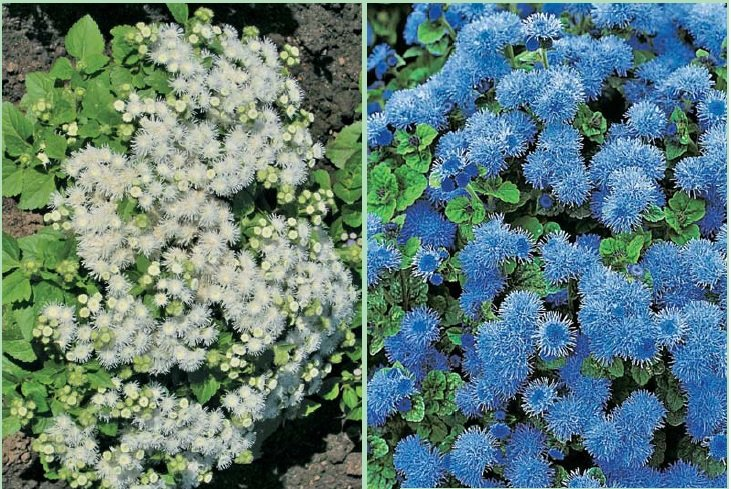 Какие цветы следует высаживать осенью?