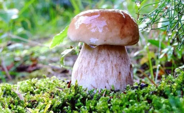 Киевлянин умер после употребления грибов