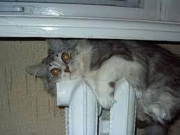 Включать отопление в домах Киева будут при температуре ниже +8 градусов