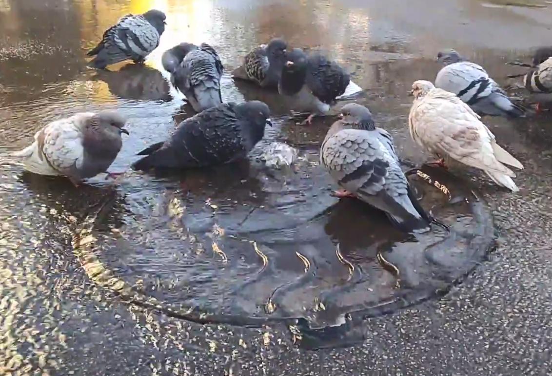 В жилом дворе Киева вторые сутки из канализации льется фонтан