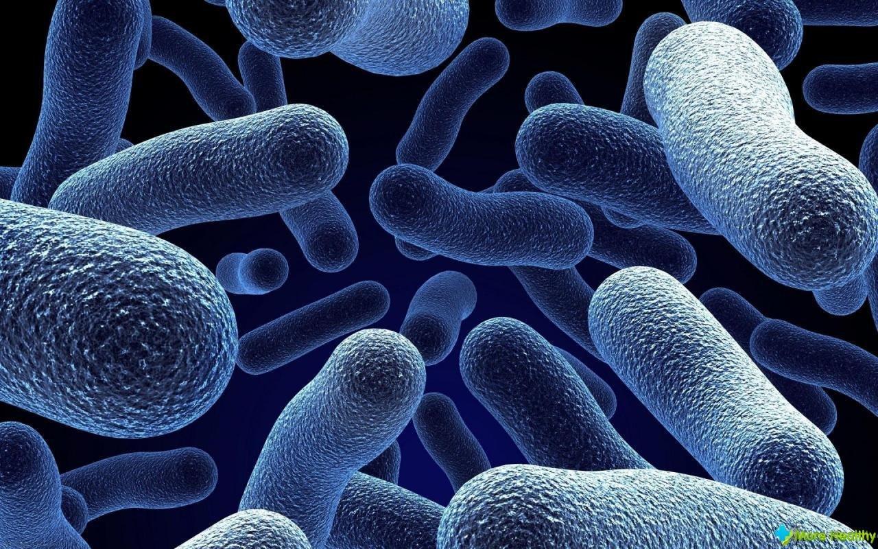 В киевской школе обнаружили смертельно опасную бактерию