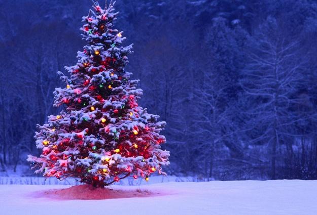 Стало известно, где в Киеве будут установлены новогодние елки