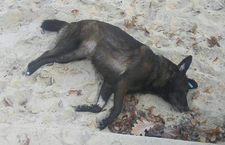 Под Киевом пьяный живодер умышленно задавил собаку