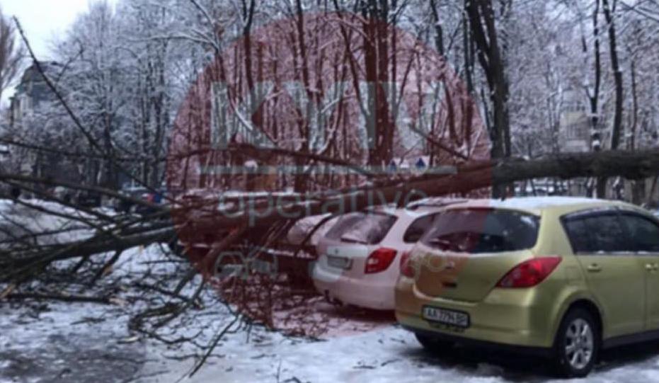 """В районе Нивок огромное дерево """"потревожило"""" припаркованные авто"""