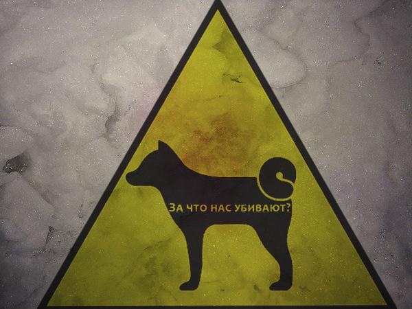 На Харьковском массиве Киева в снегу нашли яд для собак
