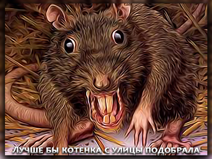 В Киеве зафиксирован случай заражения бешенством от крысы