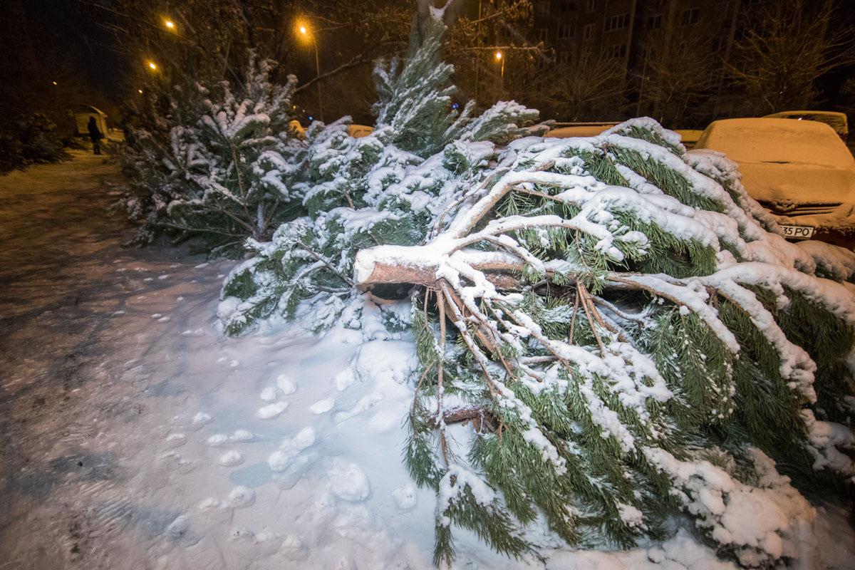 """В Киеве хулиганы пытались украсть елку, но нарвались на """"дровосека"""""""