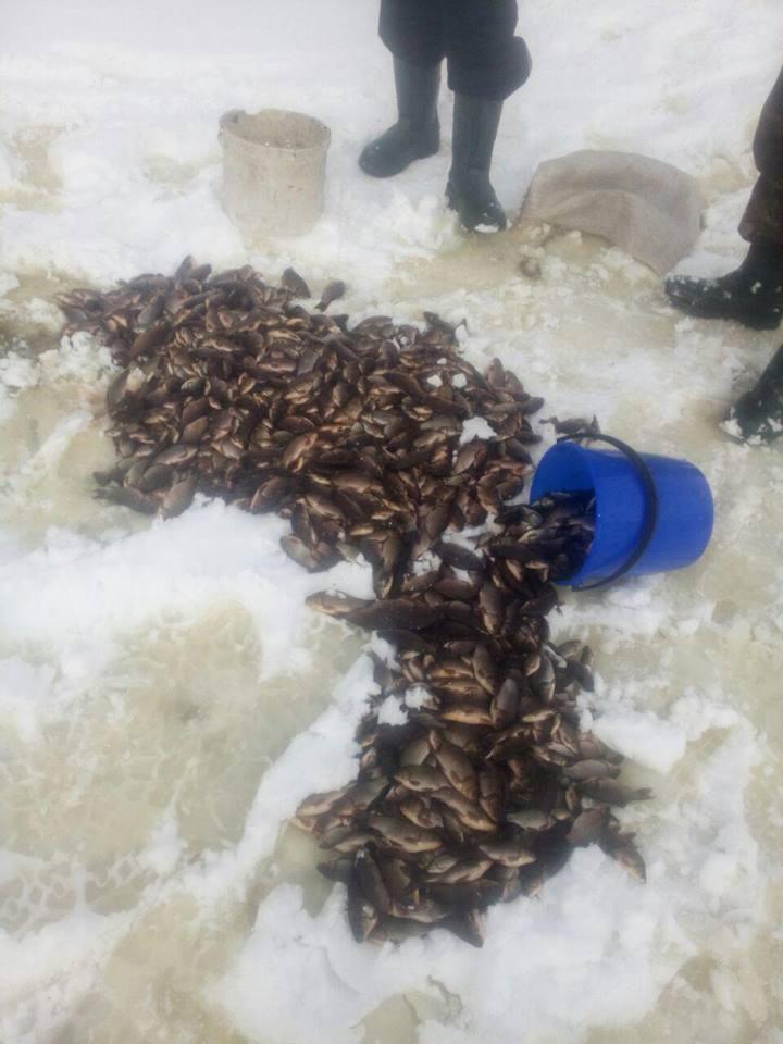 """На Киевщине рыбаки словили 33 кг карася на """"вертолет"""""""
