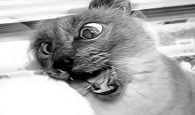 В Шевченковском районе Киева умерла кошка, зараженная бешенством