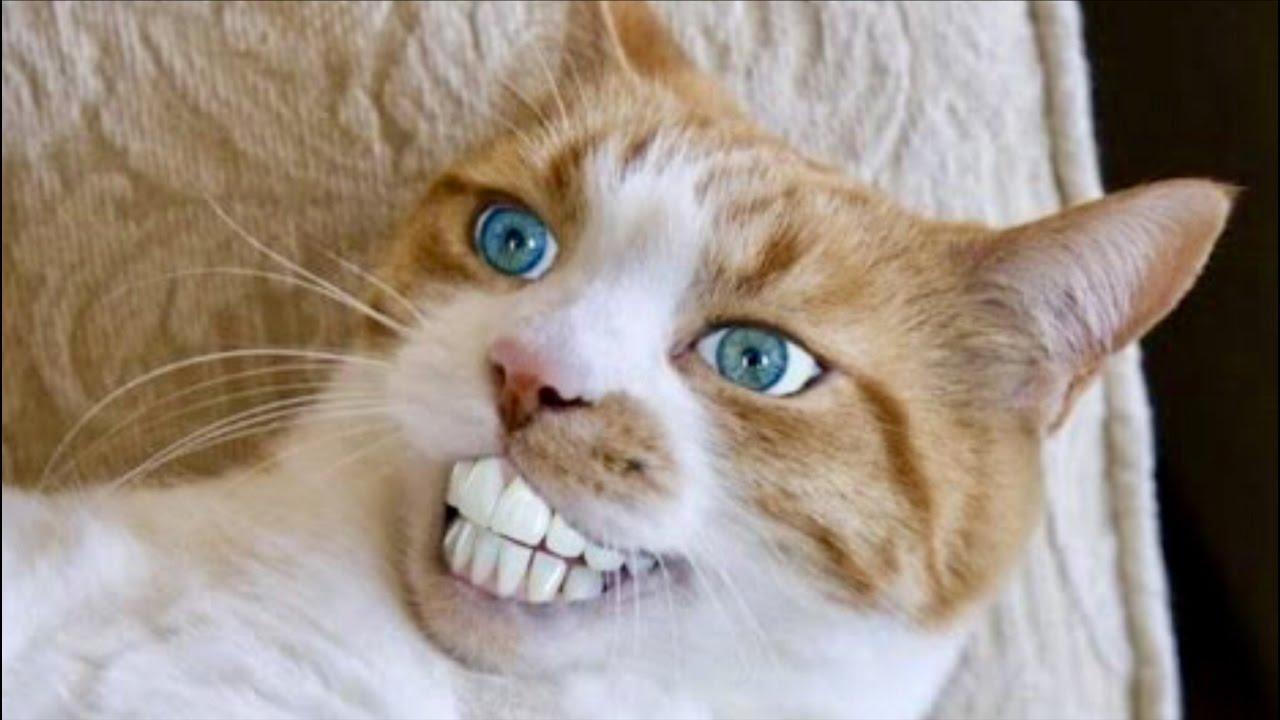 Из-за бешеного кота на Оболони отменили ярмарки