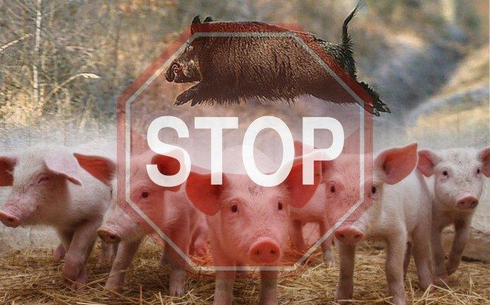 На Киевщине запретили продавать мясо свиньи из-за вспышки опасной болезни