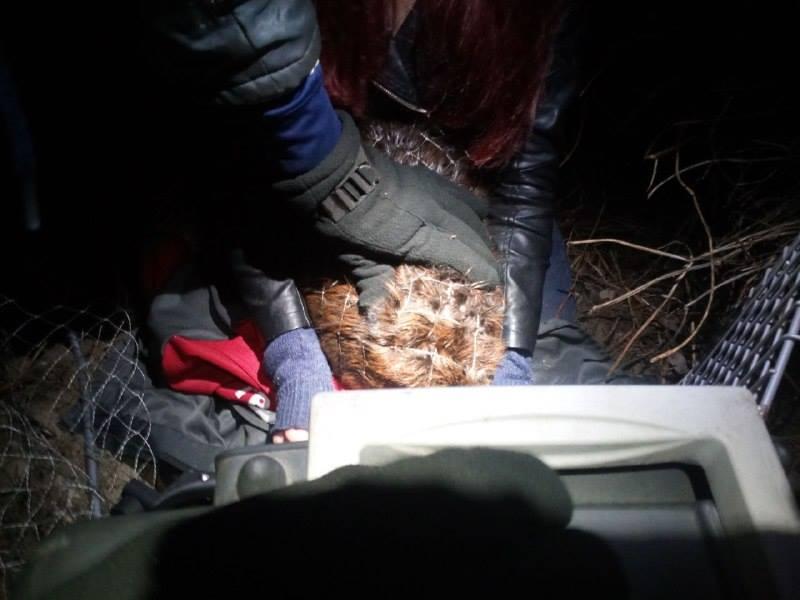 На Позняках в озере спасли бобра
