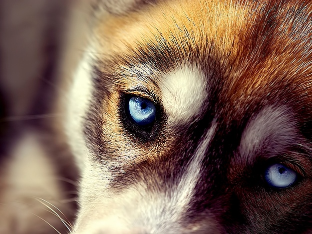 Киевлянин избил до полусмерти бродячего пса, отомстив за смерть птицы