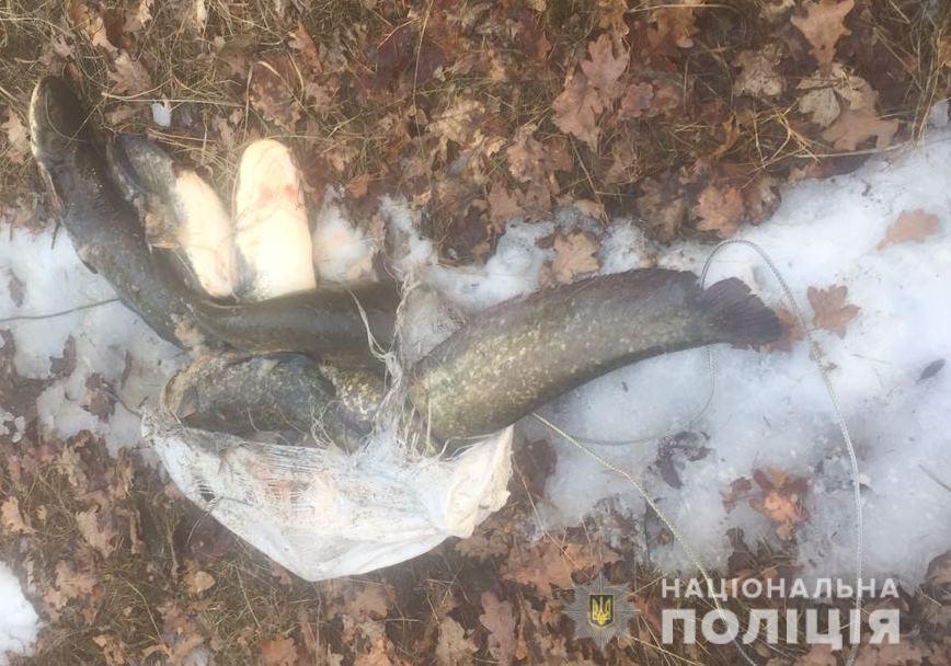 В Чернобыле рыбак наловил 27 килограмм сомов
