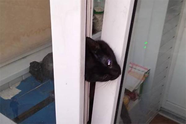 Несчастный случай в Киеве: домашний котик задушил себя в окне