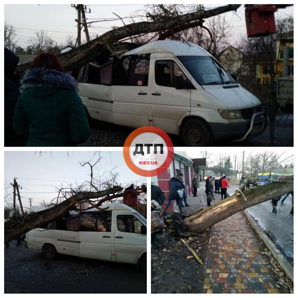 На Киевщине дерево упало на проезжающую маршрутку